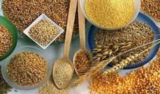 الجزائر: تراجع الإنفاق على واردات الحبوب والسميد والدقيق 14.42% في الأشهر الثمانية الأولى