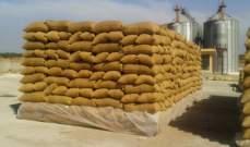 مصر تستحوذ على 175 ألف طن من القمح الروماني والاوكراني