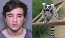 مراهق يسرق ليمور نادر من حديقة حيوان... والسبب غريب!