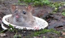 بسبب الفئران.. انقطاع الاتصال بالانترنت عن إستونيا