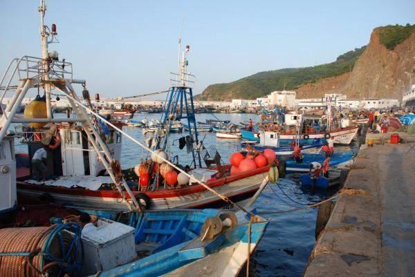 140 ألف طن إنتاج الصيد البحري والاستزراع السمكي في السعودية خلال عام