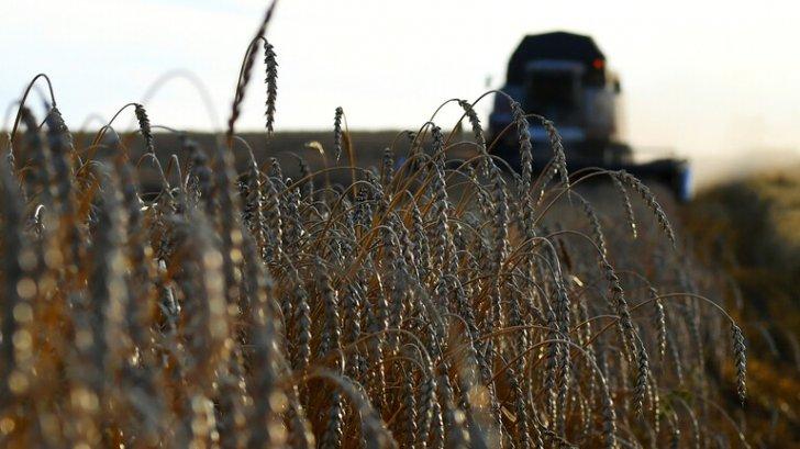 زيادة في رسوم تصدير القمح في روسيا