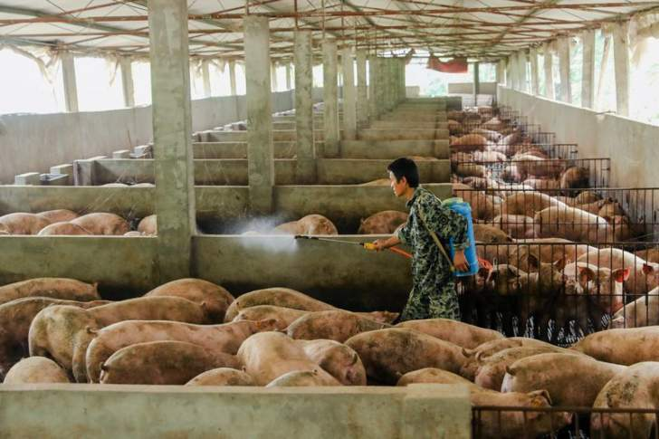 الصين تكشف تفشي حمى الخنازير الأفريقية في إقليمي سيشوان وخبي