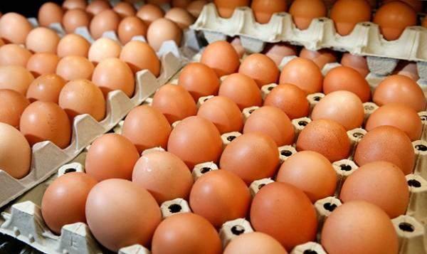 رئيس نقابة الدواجن: تدخّل وزارة الإقتصاد في تسعيرة البيض بهذا الشكل ليس صائباً