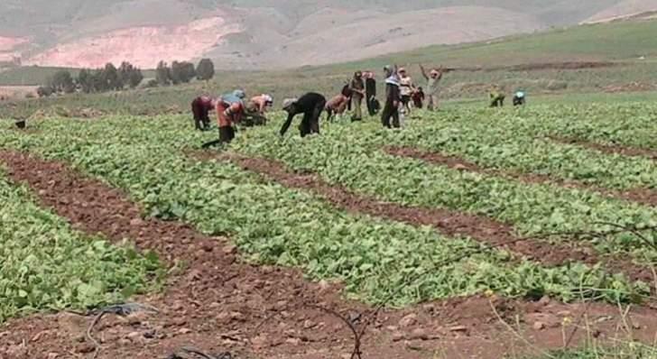"""مزارعو الجنوب: كارثة زراعية ما لم ينفذ الدعم من """"مصرف لبنان"""""""