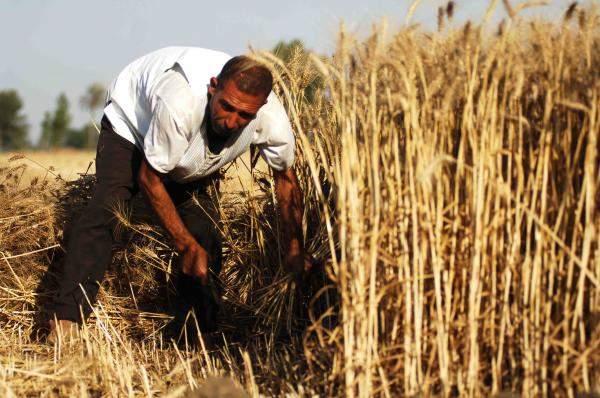 روسيا والاتحاد الأوروبي يتنافسان على صدارة موردي القمح في 2017-2018
