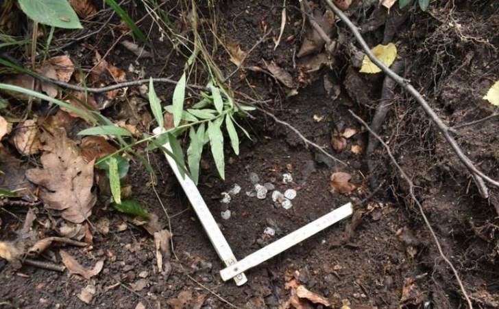 سقوط شجرة يقود للعثور على كنز ثمين مخباً منذ قرون!