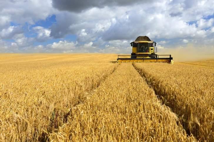 مصر تسعى لشراء كمية غير محددة من القمح للشحن في 10-25 حزيران