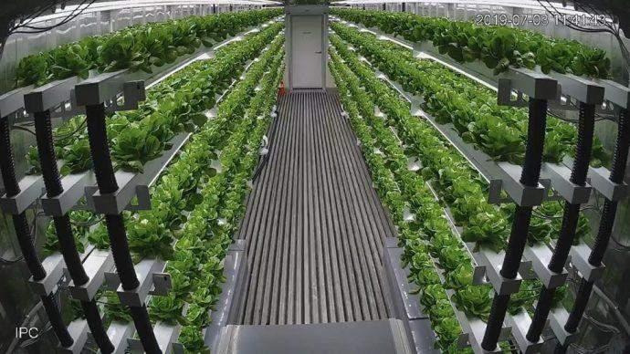 شركة كورية ترسل أول مزرعة ذكية إلى الشرق الأوسط