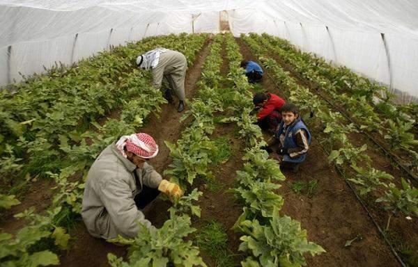 """""""الفاو"""": العراق خسر 40% من إنتاجه الزراعي جراء الحرب ضد """"داعش"""""""