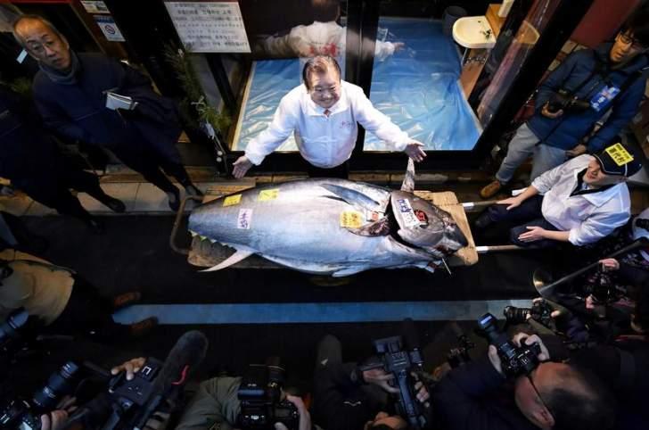بيع سمكة تونة في مزاد علني بـ117 ألف دولار!
