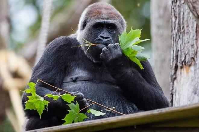 """للمرة الأولى منذ الحرب العالمية الثانية.. أقدم حديقة حيوان في العالم تغلق أبوابها بسبب """"كورونا"""""""