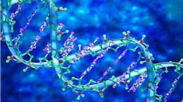 """العلماء يحولون الخلايا البشرية إلى """"كمبيوترات حيوية"""""""